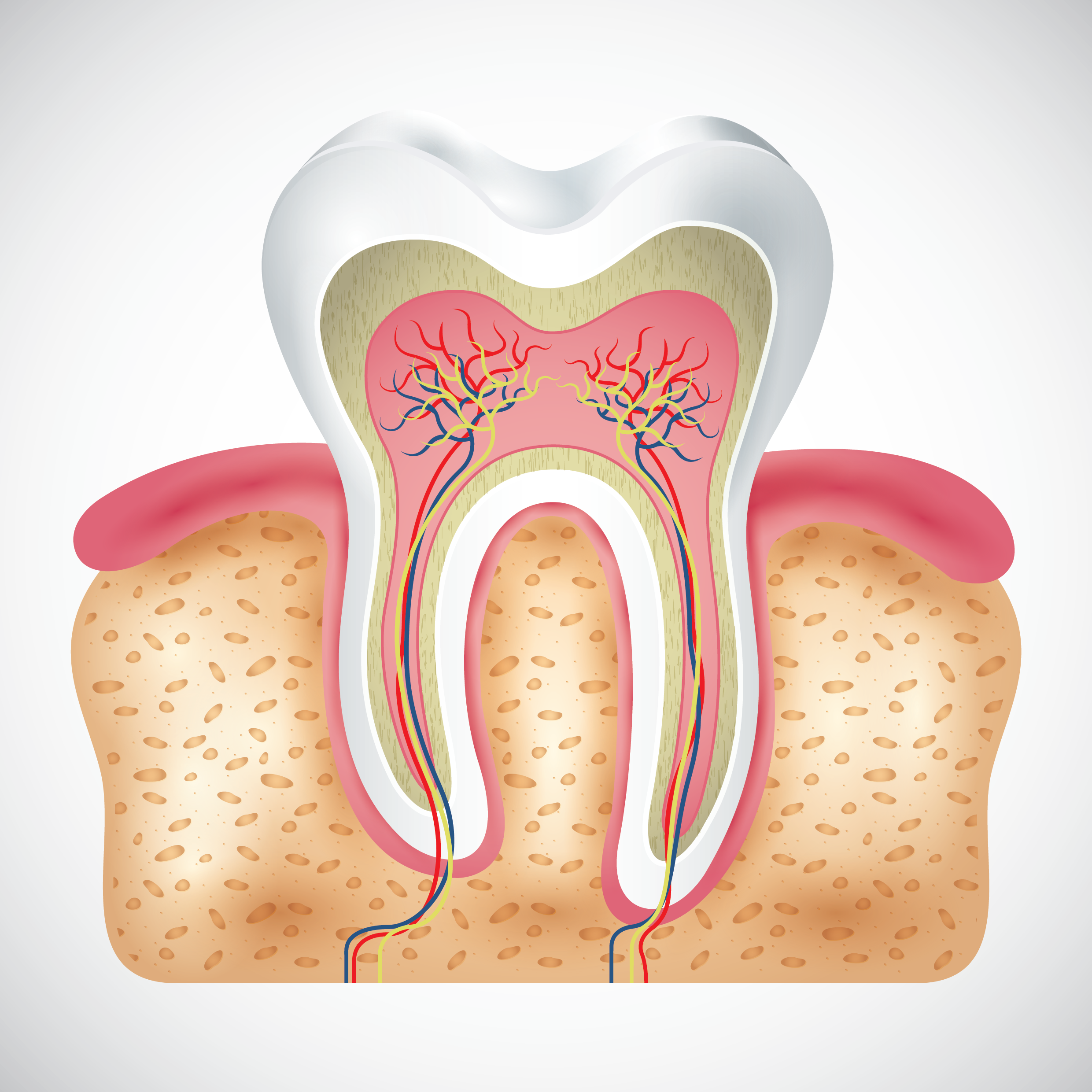 Step By Step Guide To Root Canal Procedure Artistic Dental